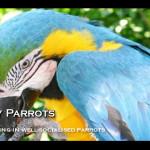 perky parrots