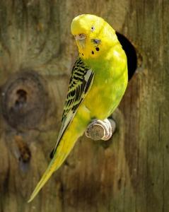 safe bird cage